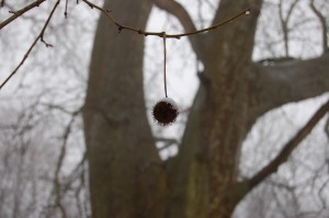 DSC_4821 fruit premier plan neige