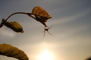 rudy100 - copie araignée macro contre jour